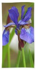 Beach Towel featuring the photograph Blue Bearded Iris by Brenda Jacobs