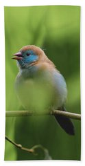 Beach Towel featuring the photograph Blue Bird Chirping by Raphael Lopez