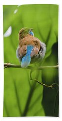 Beach Towel featuring the photograph Blue Bird Has An Itch by Raphael Lopez