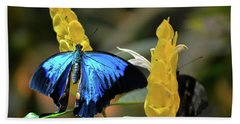 Blue Beauty Butterfly Beach Towel