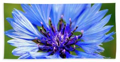 Blue Cornflower Beach Sheet