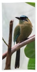 Blue-crowned Motmot Beach Sheet
