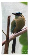 Blue-crowned Motmot Oil Beach Sheet