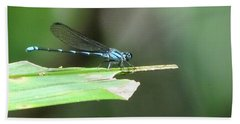 Blue Dragonfly Beach Sheet