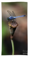 Blue Dragonfly Dancer Beach Towel