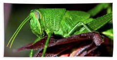 Blue Eyed Green Grasshopper 001 Beach Towel