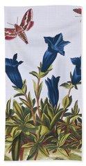 Blue Gentian  Trumpet Flower  Beach Towel by Pierre-Joseph Buchoz