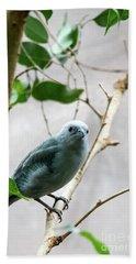 Blue-grey Tanager 2 Beach Towel