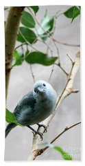 Blue-grey Tanager Beach Towel