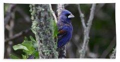 Blue Grosbeak In A Mangrove Beach Sheet