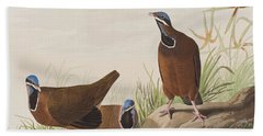 Blue Headed Pigeon Beach Towel by John James Audubon