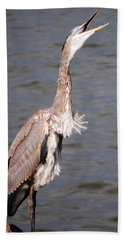 Blue Heron Calling Beach Towel
