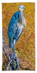 Beach Towel featuring the photograph Blue Heron In Maryland by Nick Zelinsky