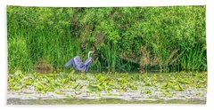 Beach Towel featuring the photograph Blue Heron Landing May 2016.  by Leif Sohlman