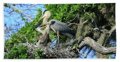 Beach Towel featuring the photograph Blue Heron Series Baby 1 by Deborah Benoit