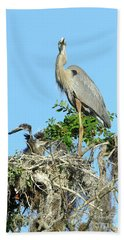 Beach Towel featuring the photograph Blue Heron Series Baby 2 by Deborah Benoit
