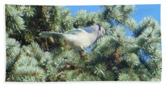 Blue Jay Colorado Spruce Beach Towel