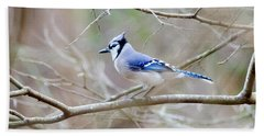 Beach Towel featuring the photograph Blue Jay by George Randy Bass