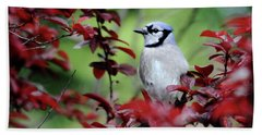 Blue Jay In The Plum Tree Beach Sheet by Trina Ansel