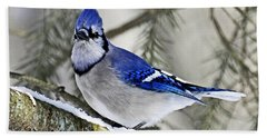 Blue Jay In Winter Beach Towel