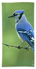 Blue Jay On The Fence Beach Towel