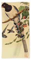 Blue Magpie, Urocissa Magnirostris Beach Towel by John Gould