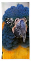 Blue-throated Macaw Close-up Beach Towel