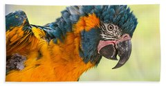 Blue Throated Macaw Beach Towel by Jamie Pham