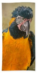 Blue Throated Macaw Portrait Beach Towel by Jamie Pham