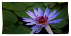 Blue Water Lily In Pond 2 Beach Towel