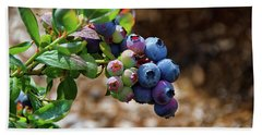 Blueberries Out On A Limb Beach Towel