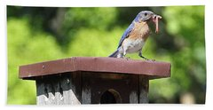 Bluebird Breakfast Feeding Beach Sheet