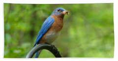 Bluebird Catches Worm Beach Towel by Rand Herron