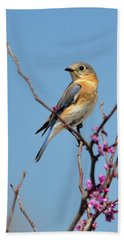 Bluebird In Spring Beach Sheet