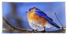 Bluebird In Winter Beach Towel