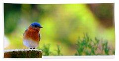 Bluebird Beach Sheet