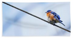 Beach Towel featuring the photograph Bluebird Of Happiness by Linda Unger