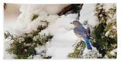 Beach Towel featuring the photograph Bluebird On Snow-laden Cedar by Robert Frederick
