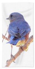 Bluebird On White Beach Sheet by Robert Frederick
