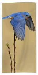 Bluebird Takes Flight Beach Towel