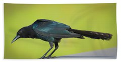 Boat-tailed Grackle Male Beach Towel