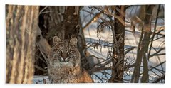 Beach Towel featuring the photograph Bobcat by Brenda Jacobs