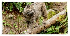 Bobcat In Forest Beach Towel by Teri Virbickis