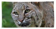 Bobcat In The Trees Beach Sheet