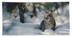 Bobcat Lynx Rufus Adult Resting In Snow Beach Towel
