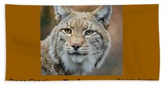 Bobcat - Lynx Rufus Beach Towel