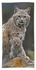 Bobcat Mother And Kitten North America Beach Towel