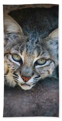 Bobcat Stare Beach Sheet