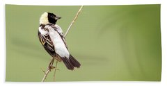 Bobolink Looking At You Beach Towel