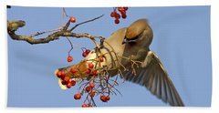Bohemian Waxwing Beach Sheet